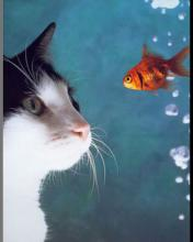 Click image for larger version.  Name:Animal-16-.jpg Views:6 Size:5.8 KB ID:20831