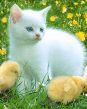 Click image for larger version.  Name:Animal-47-.jpg Views:10 Size:8.6 KB ID:20862