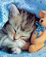 Click image for larger version.  Name:Animal-52-.jpg Views:2 Size:9.7 KB ID:20867
