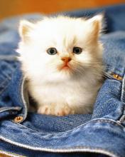 Click image for larger version.  Name:Animal-83-.jpg Views:7 Size:8.6 KB ID:20899