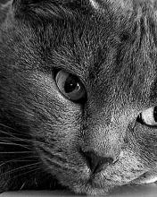Click image for larger version.  Name:Animal-103-.jpg Views:3 Size:13.3 KB ID:20919