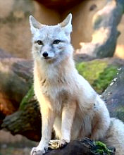 Click image for larger version.  Name:Animal-111-.jpg Views:3 Size:13.7 KB ID:20927