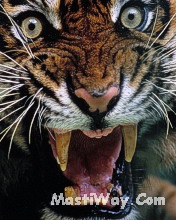 Click image for larger version.  Name:Tigar.jpg Views:8 Size:46.4 KB ID:20213