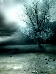 Click image for larger version.  Name:Lonely_Tree-.jpg Views:5 Size:31.0 KB ID:20478