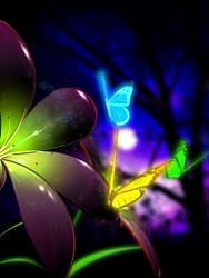Click image for larger version.  Name:Neon_Butterflies-.jpg Views:11 Size:22.3 KB ID:20501