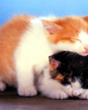 Click image for larger version.  Name:Animal-14-.jpg Views:3 Size:5.7 KB ID:20829