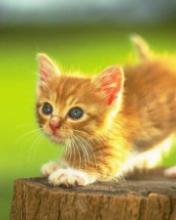 Click image for larger version.  Name:Animal-23-.jpg Views:3 Size:6.2 KB ID:20838