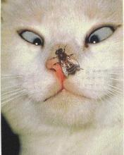 Click image for larger version.  Name:Animal-33-.jpg Views:4 Size:6.7 KB ID:20848