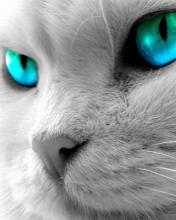 Click image for larger version.  Name:Animal-43-.jpg Views:3 Size:7.2 KB ID:20858