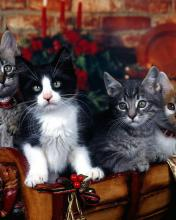 Click image for larger version.  Name:Animal-51-.jpg Views:2 Size:9.2 KB ID:20866
