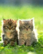 Click image for larger version.  Name:Animal-59-.jpg Views:4 Size:7.3 KB ID:20874