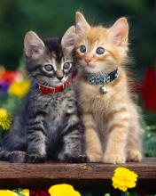 Click image for larger version.  Name:Animal-92-.jpg Views:3 Size:9.0 KB ID:20908