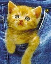 Click image for larger version.  Name:Animal-100-.jpg Views:4 Size:12.0 KB ID:20916