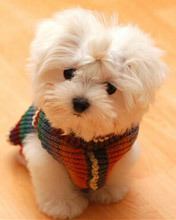 Click image for larger version.  Name:Animal-106-.jpg Views:2 Size:12.7 KB ID:20922