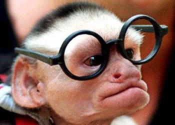 Coaching Centre is a monkey business
