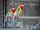 colourful-ones-of-kurushetra-anna-university-photo-gallery-024