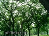 iiit-heyderabad-photos-012
